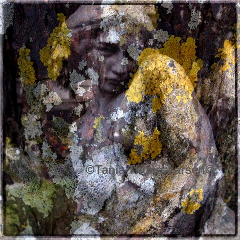 Staglieno Project - Lichen