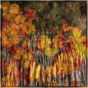 Wallflowers, June